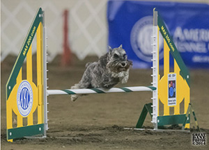 doy-pepper-2014agility